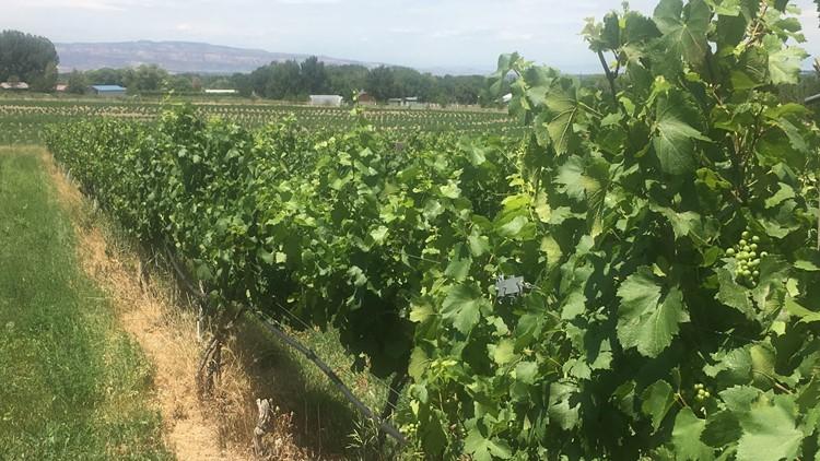 Peachfork Orchards & Vineyards