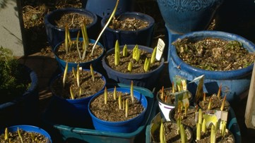 It's time to break out those spring bulbs in your garden