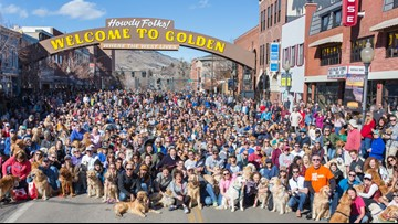 Well over 1,000 golden retrievers hang out in Golden