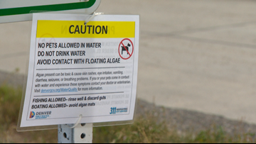 Toxic blue-green algae a growing threat to dogs