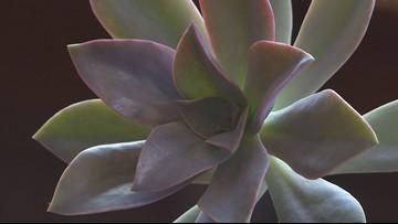 Proctor's Garden: Growing great succulents