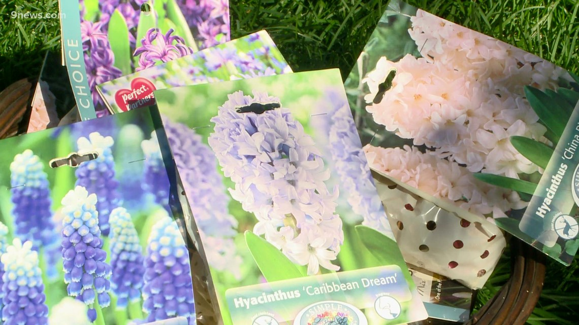 Proctor's Garden: Time to plant bulbs