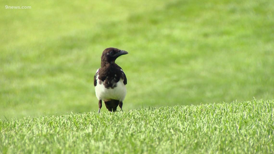 Birdies aren't always enjoyable at this golf course