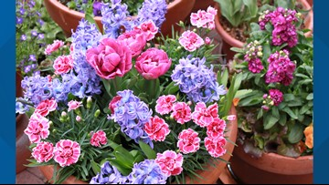 Proctor's Garden: How to plant bulbs in pots