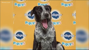 Colorado pup named Aspen to compete in this year's Puppy Bowl