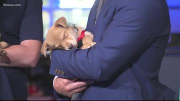 Petline9: Maxfund Animal Adoption Center