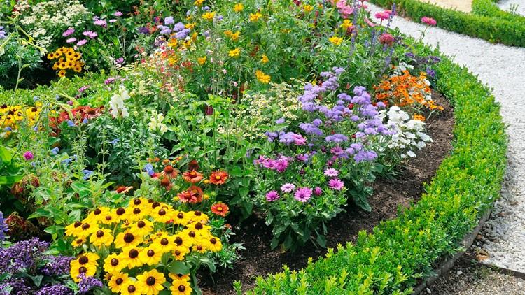 beautiful background of bright garden flowers landscaping summer yard garden