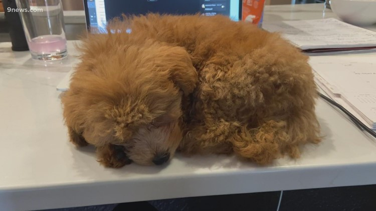 Just try and outdo the cuteness of this pup's nap