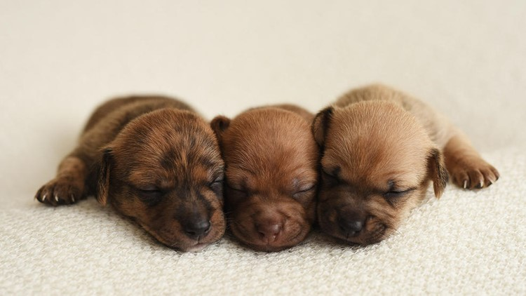<p>Photographer Kelly Frankenburg put her talents to use on these pups in an effort to help them find forever homes.</p>