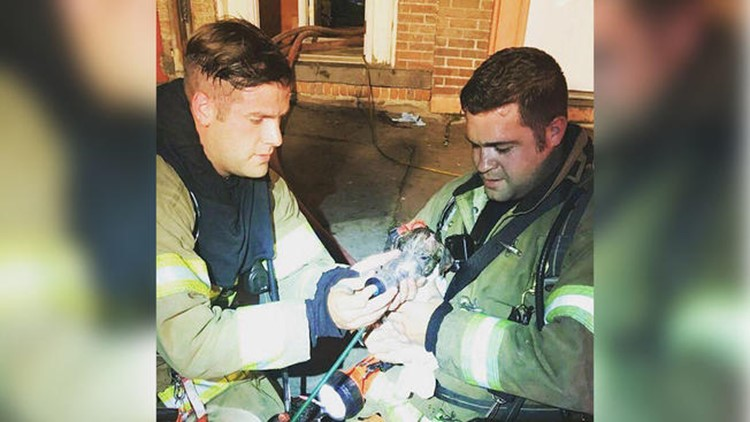 <p>Firefighters found Titus under a bed when they responded to an apartment fire. Now they're giving him a forever home.</p>