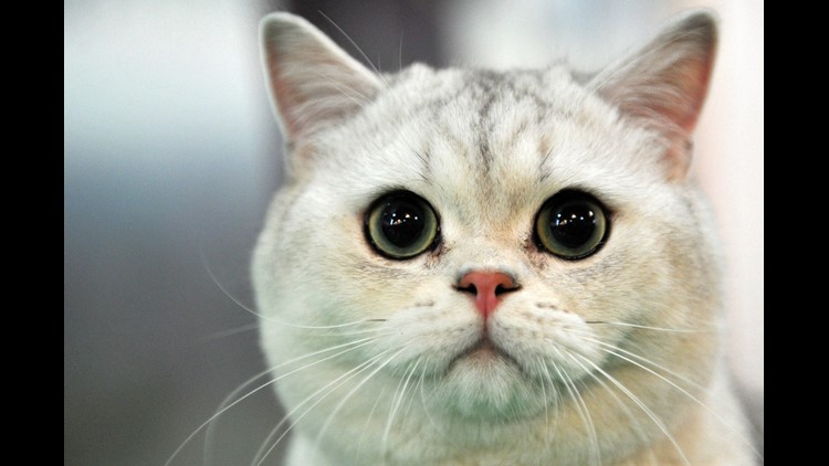 Deceased New York woman leaves $300,000 to two cats