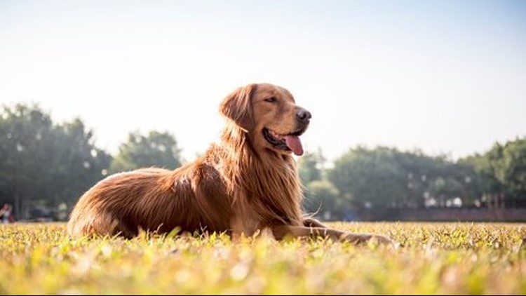 Air Bud — yes, the dog — offers to help Cleveland Cavaliers via Twitter