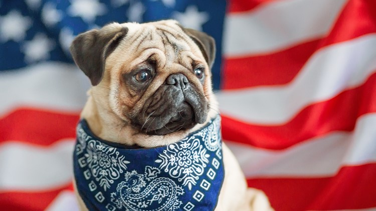How to keep your pets calm during 4th of July fireworks