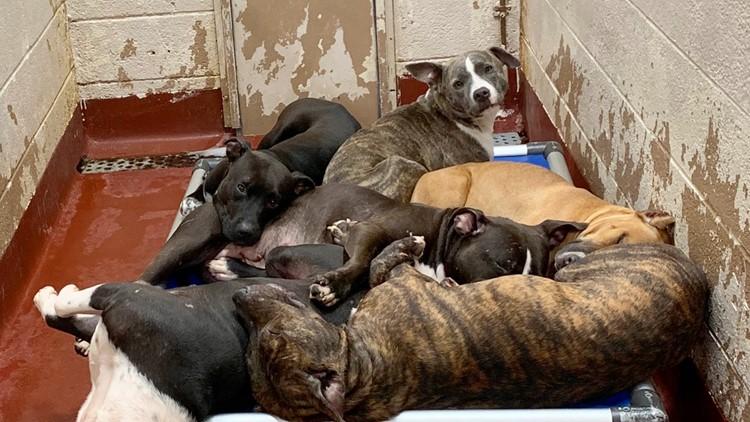 Fulton DeKalb Animal Shelters Dogs