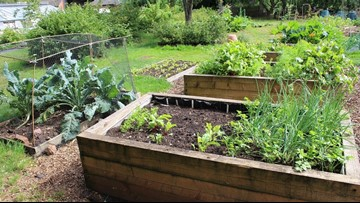 Summer heat means it's time for a veggie garden checkup