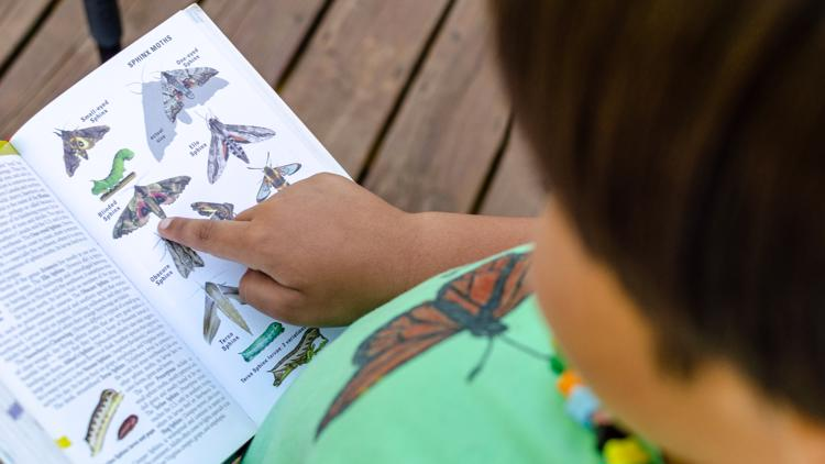 Meet West Michigan's youngest conservationist, Liam the Lepidopterist